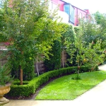 Townhouse courtyard with fruit trees